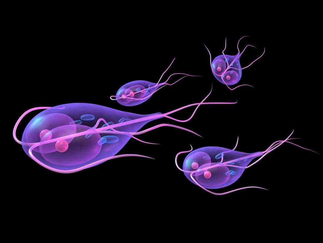 can t get rid of giardia